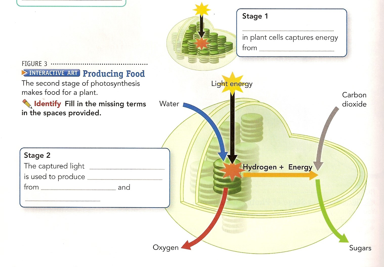 Notebook pages mrs stolting science handout diagram of photosynthesis with fill in the blanks 17 handout diagram of cellular respiration with fill in the blanks ccuart Image collections